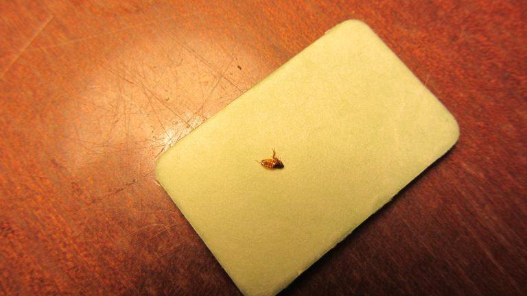 Пластины от комаров против блох