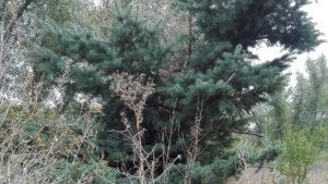 Какие-то уроды спилили макушку елки