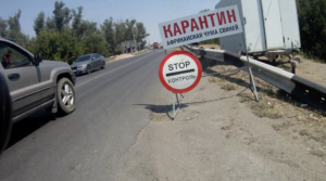 Африканская чума свиней в Среднеахтубинской пойме
