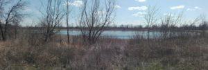 Озеро Проклятое заросло камышом